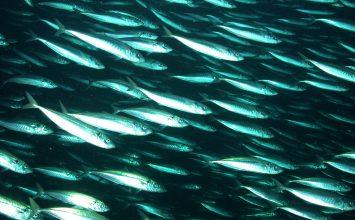 'Under the Sea-Wind:' Rachel Carson's First Literary Masterpiece